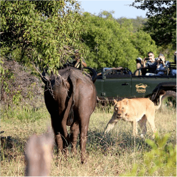 Authentic African Safaris - Rhulani Safaris