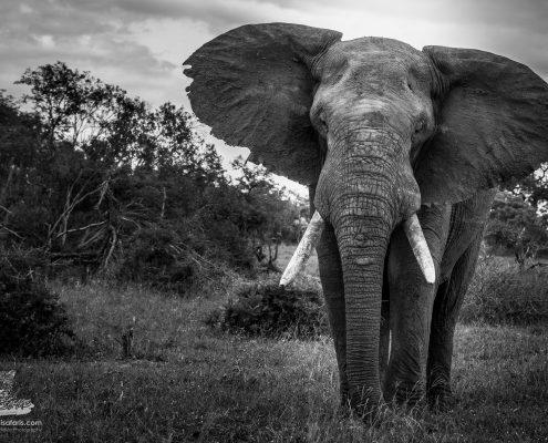 rhulani-safaris-gallery-239