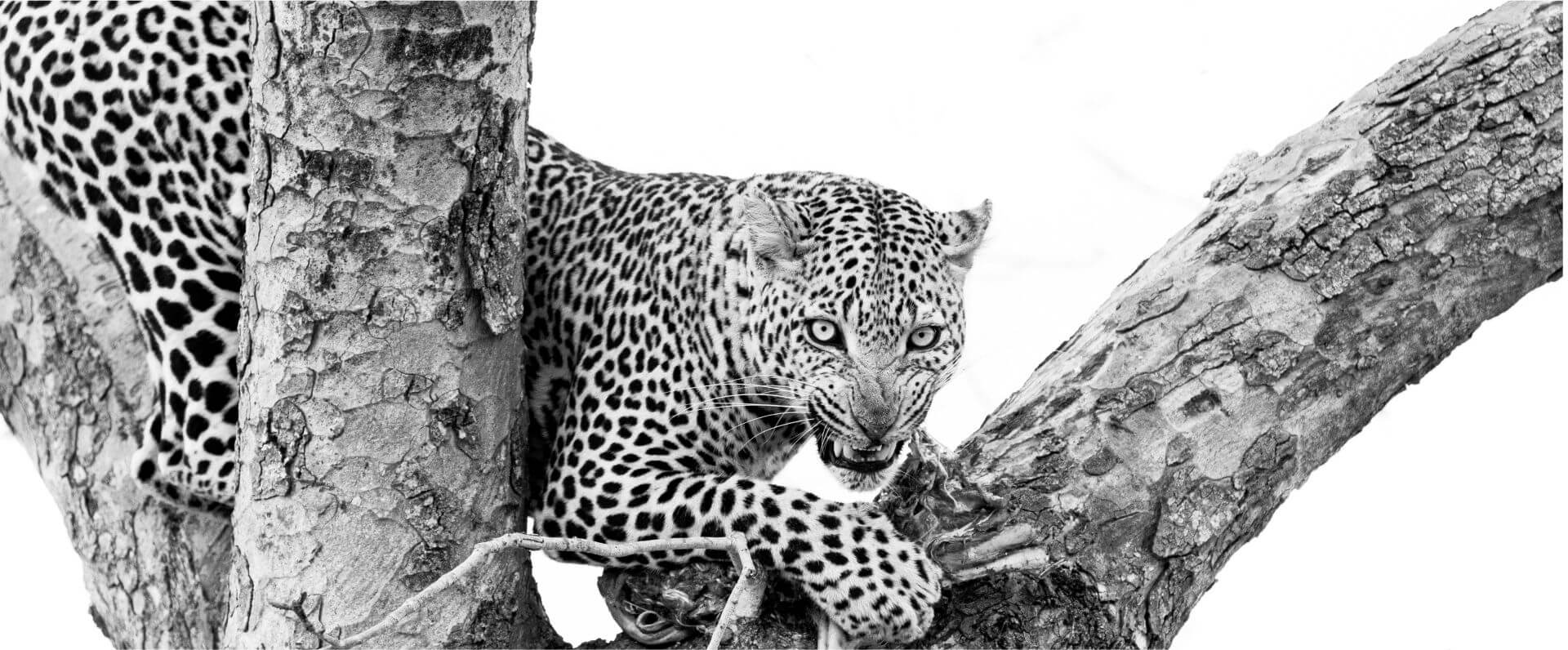 rhulani-safaris-slider-9