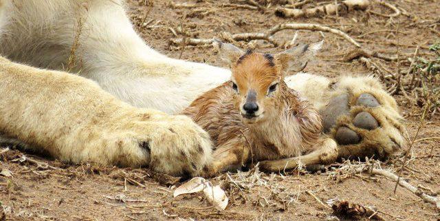 rhulani-safaris-blog-1