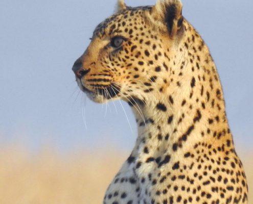 safari bookings