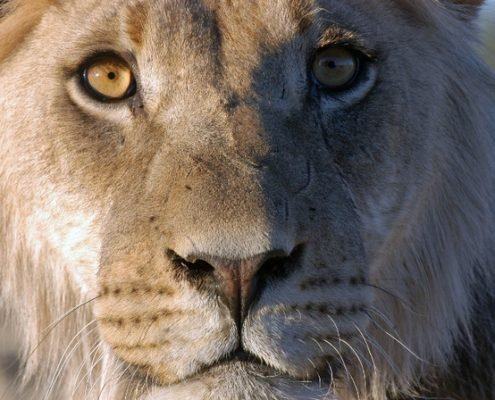 Best Big Cat Photo Safari